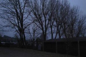 Baum 2011